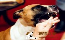怎么训练狗狗不咬人及被狗咬伤后正确的救治方法