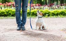 """我们的狗狗真的需要""""训练""""吗?"""