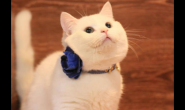 猫粮和冻干可以一起喂猫咪吃吗