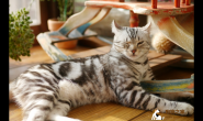 猫太常洗澡会折寿?猫咪冬天清洁保养注意事项
