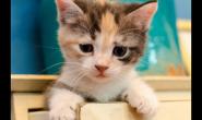 平常给小猫咪喂什么猫粮 好猫粮怎么样