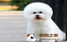 宠物狗美容的步骤及注意事项