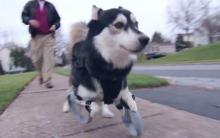 3D列印义肢,让差点被安乐死的狗狗开心奔跑