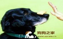 训练小狗服从 专家教你绝招