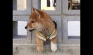 狗狗喂什么狗粮营养好 好狗粮怎么样
