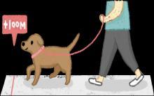 4个生活好习惯,狗狗减肥超简单!