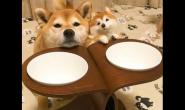 平常给狗狗吃什么狗粮好 好狗粮好吗