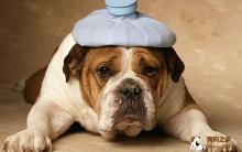 狗狗生病徵兆及饮食注意事项