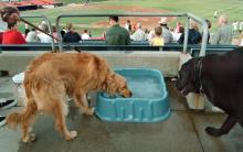 狗狗脱水的症状、原因和治疗方法