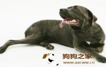 狗狗软骨病 症状种类及防治