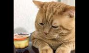 春天的猫咪需要吃什么猫粮 好猫粮好不好