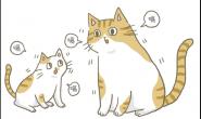 嗝~嗝~嗝!猫咪也会打嗝吗?