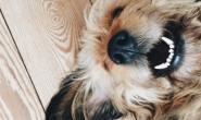 狗狗的十大癌症迹象