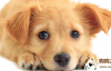 狗狗一天应该吃多少?