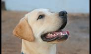 除了刷牙,原来这些方法也能祛除狗狗的口气!