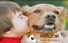 养狗指南:狗狗性格判断训练策略