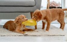 狗狗行为与零食之间的关系