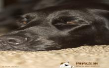 狗的乳腺肿瘤怎么破及预防措施
