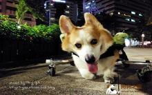 慈母多败儿之狗狗生命在于运动