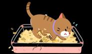 猫猫为什么会埋便便?才不是因为爱干净啦!