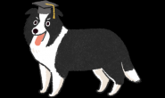 谁是世界上最聪明的狗狗?狗界的学霸原来是…