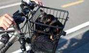 带狗狗骑自行车?遵循这些自行车安全提示!