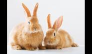 原来兔子的脚掌没有肉垫 所以更不能让脚底毛消失!