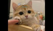 圆脸猫咪喂什么猫粮长得好 好猫粮好吗