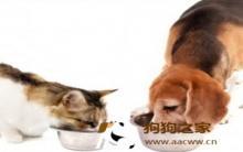 可蒙犬:猫狗健康饮食 粮食挑选利弊分析
