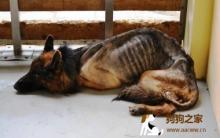 狗狗死亡 主人的心情描述