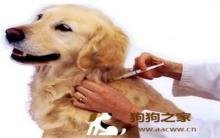 狂犬病疫情恶化 台湾人心惶惶