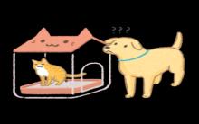 狗狗偷吃猫便便!2个训练方法你不得不知