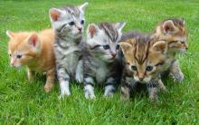 幼猫很可爱,但我不会养?超详细饲养指南全在这!