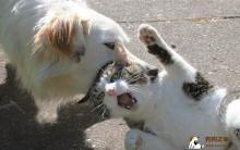 拉皮斯病防治 动物咬伤不要慌
