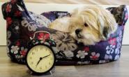 你的狗能知道你走了多久吗?