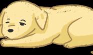 狗狗鼻子变干了怎么办?别紧张有时干鼻子是很正常的!