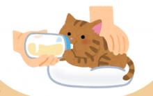 几个你不能不知道的幼猫饮食营养注意事项