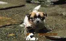 冬季带着狗运动 有效预防疾病