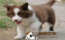 训练狗狗不抗拒进笼子正确步骤