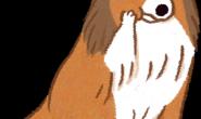 小型犬、短吻犬等6个品种的狗狗口腔特别容易有问题