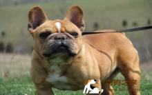 【癫痫症状】犬癫痫诊断及治疗方法