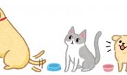 老大您先请 猫猫狗狗吃饭顺序有学问!
