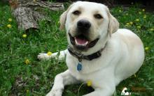 狗狗牙周病症状 听专家怎么说