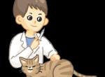 对抗猫疱疹病毒,把握这四个要点!