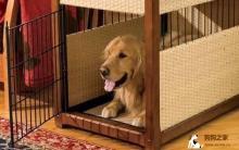 狗笼内训练 怎么养成独立性格