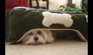 如何判断狗狗是否情绪低落?