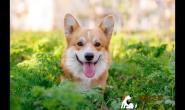 狗狗换季肌肤问题总是没完,这几招帮助改善皮肤状况!
