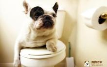 训练狗上厕所 固定大小便有方法!