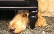 狗狗的社会化不足 训练及改善方法