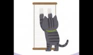 如何防止猫咪乱抓家具?学会这4招让猫咪不乱抓